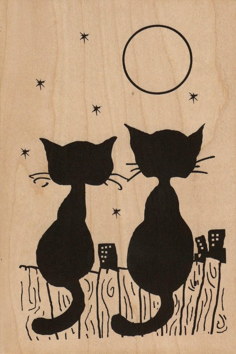 carte postale en bois-chat-micropanorama