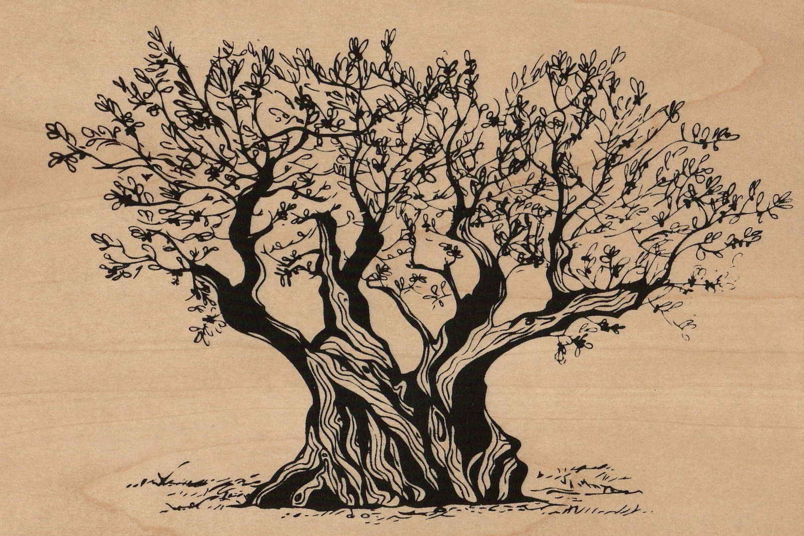 olivier-arbre-carte postale en bois-micropanorama